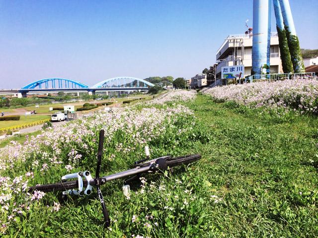 朝練の多摩川河原