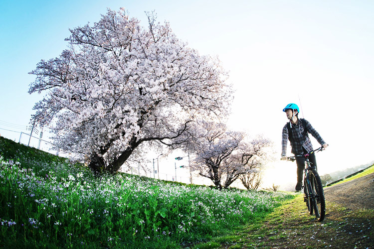 MTB マウンテンバイク YAMADORI 1st 26 多摩川河原サイクリングロード 桜 花見