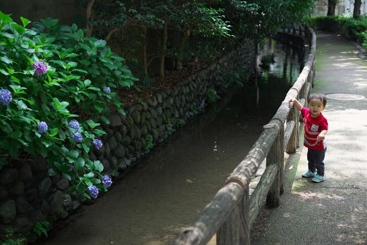 近所の小川を息子と一緒に歩く