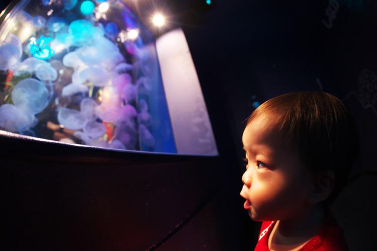 しながわ水族館に息子と奥さんと一緒に行きました