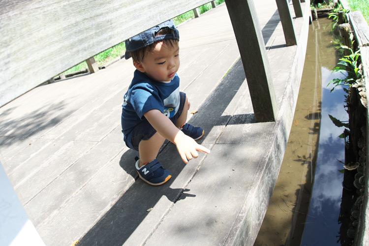 近所の多摩川台公園の池でウシガエルを見てダーダー言っている叶大