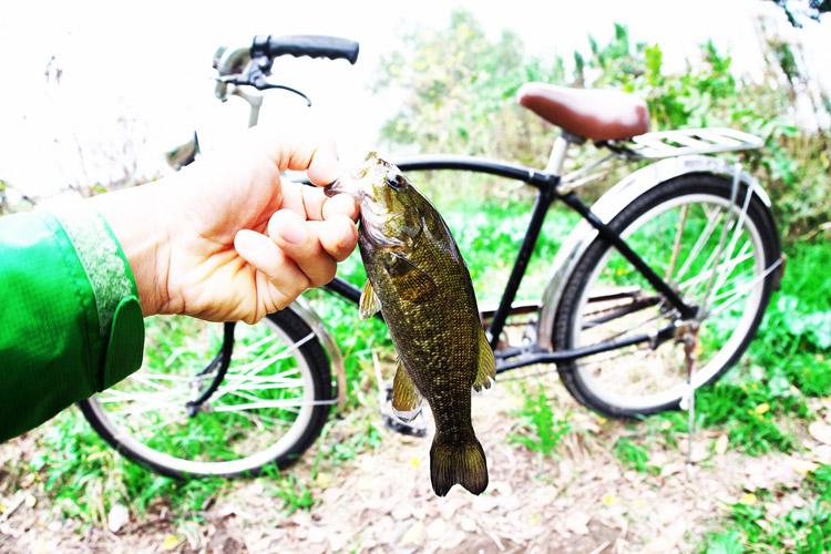 BIKE & FISHで釣れたスモールマウスバス