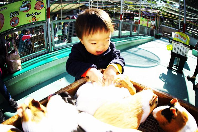 野毛山動物園でモルモットと触れ合って大興奮の叶大