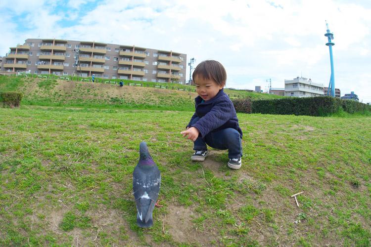 鳩と戯れる叶大