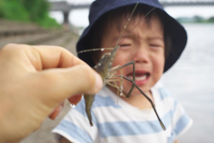多摩川でテナガエビを見て泣く叶大
