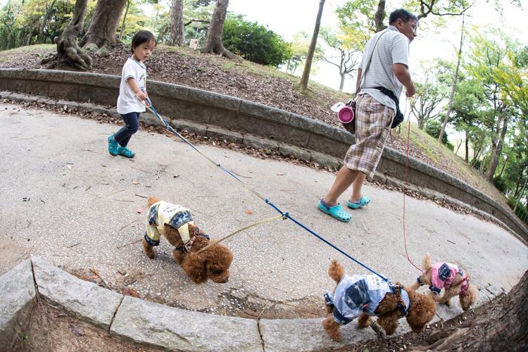 北九州で犬の散歩をする叶大