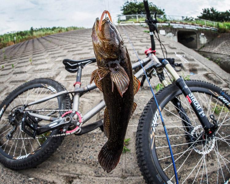 JACKALL ジャッカル マイクロフリック2.5 シナモンパールで釣れたカワアナゴ