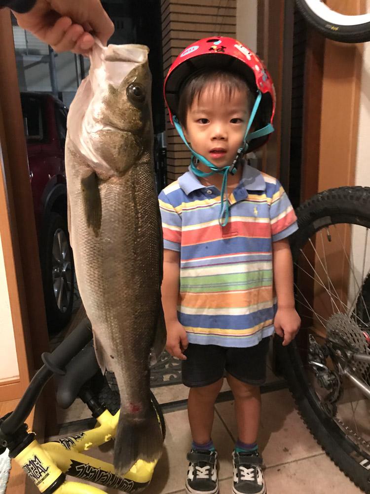 多摩川で釣れたスズキと叶大