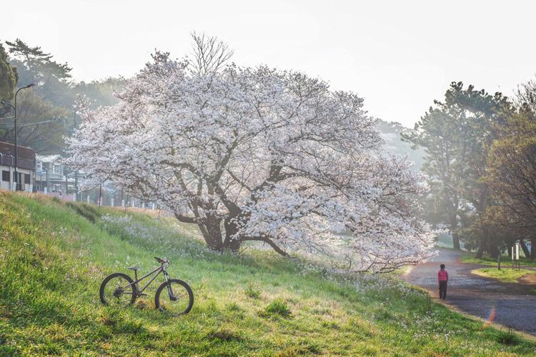 多摩川河原 桜とcroMOZU275