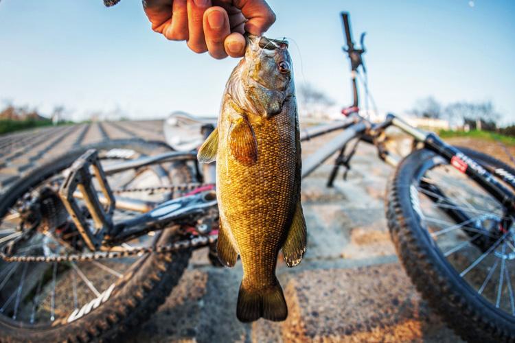 多摩川 BIKE&FISHで釣れたスモールマウスバス