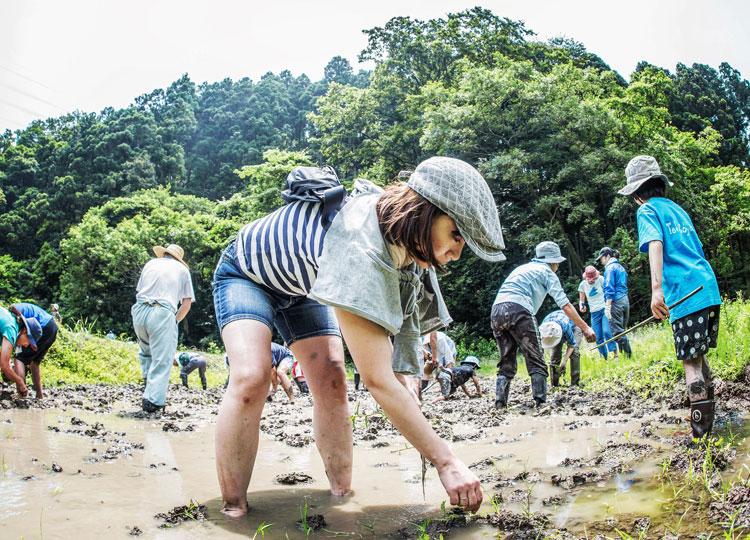 寺前谷戸復元プロジェクト定例作業に参加して田植え体験