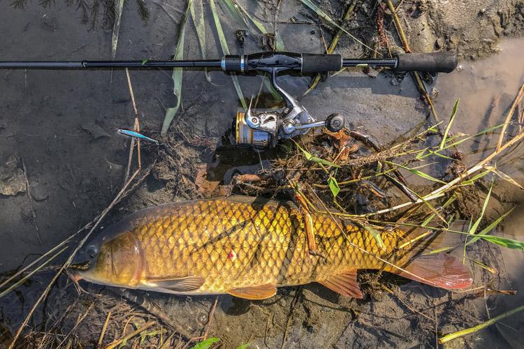 多摩川 朝活BIKE&FISHでシンキングペンシルで釣れたノゴイ
