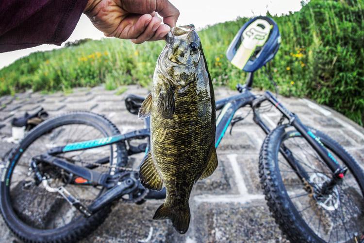 多摩川 朝活BIKE&FISHで釣れたスモールマウスバス