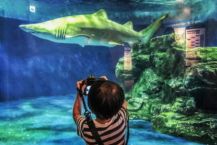 しながわ水族館 サメを一眼で撮る叶大