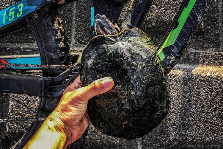 多摩川 朝活BIKE&FISHで釣れたミドリガメ ミシシッピーアカミミガメ