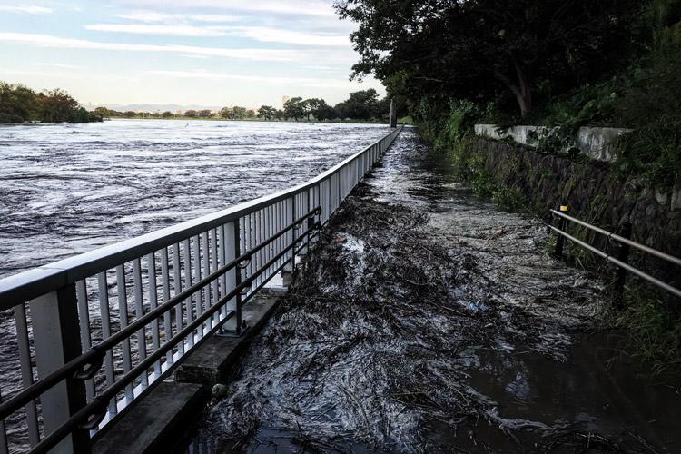 多摩川 丸子橋 堰 多摩川の増水 遊歩道 氾濫