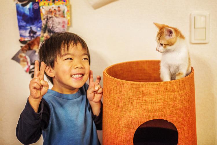 けんぷっぷさん宅の子猫と叶大
