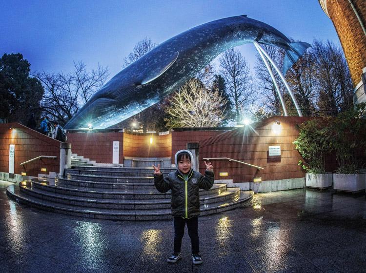 上野 国立科学博物館 叶大