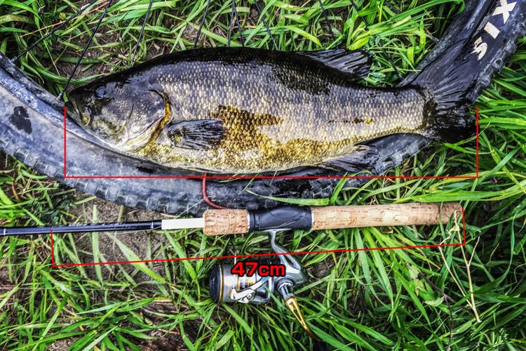 多摩川 BIKE&FISH スモールマウスバス 47cm