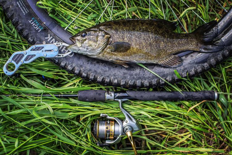 朝活BIKE&FISHで釣れたスモールマウスバス 40cm弱