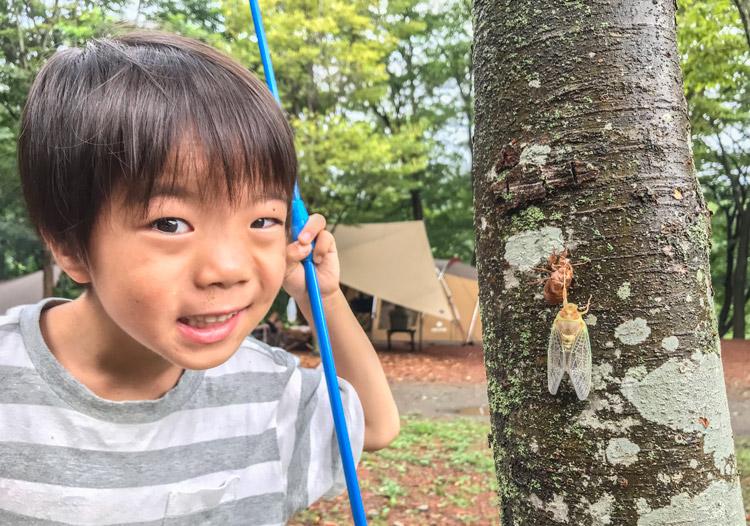 長瀞オートキャンプ場 叶大 虫取り セミの羽化