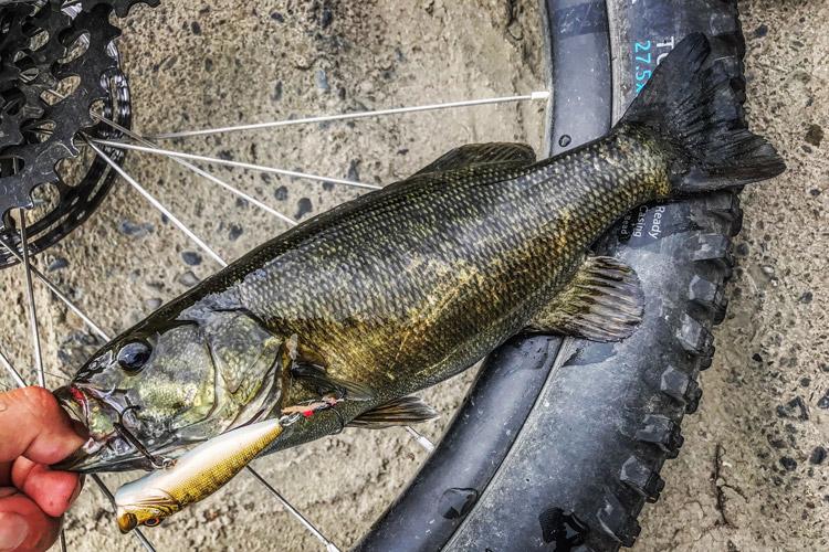 朝活BIKE&FISHで釣れたスモールマウスバス Megabass POPX