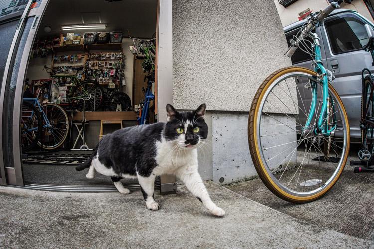 ローカルピット Local Pit 猫 ネコ