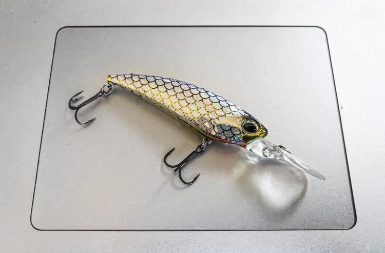 朝活BIKE&FISH シャッドで釣れたクロダイ 噛み砕かれたREALIS SHAD ホロシールチューン