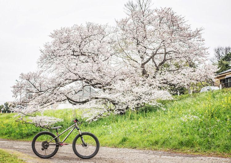 多摩川河原 croMOZU275 桜 ソメイヨシノ 花見
