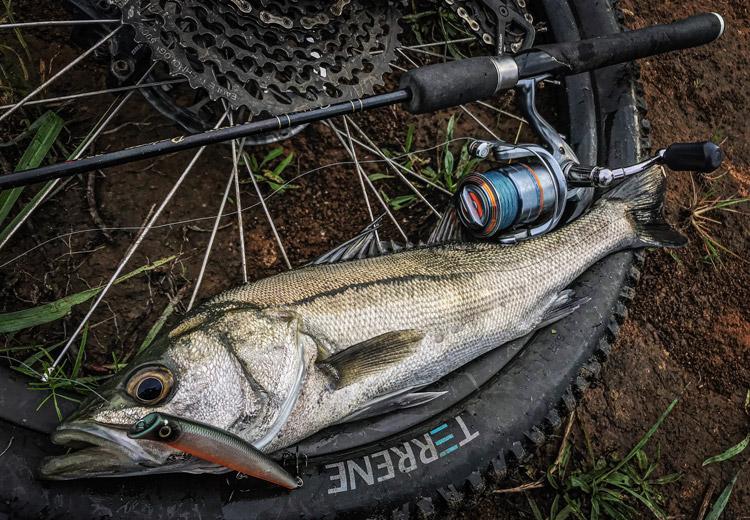 多摩川河原 朝活BIKE&FISH エリア10 エリテンで釣れたシーバス
