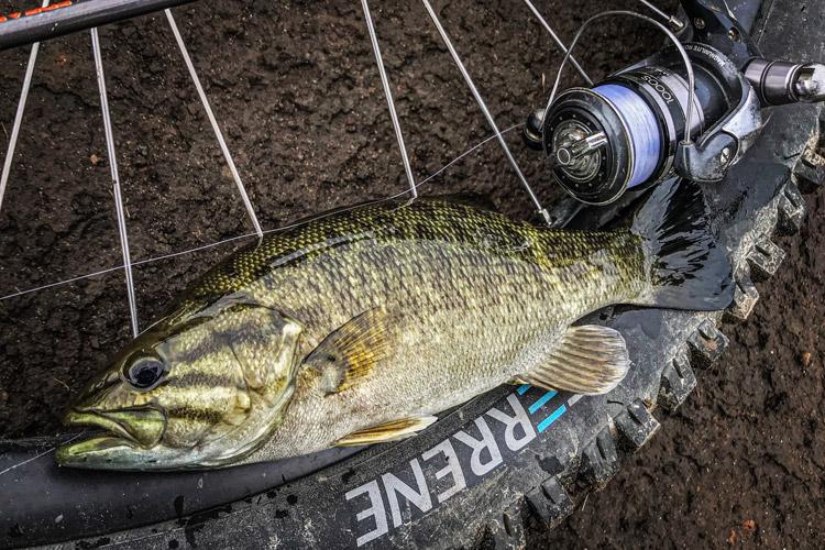 多摩川河原 夜活BIKE&FISH ワームで釣れたスモールマウスバス