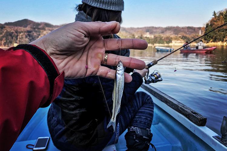 津久井湖 ワカサギ釣り