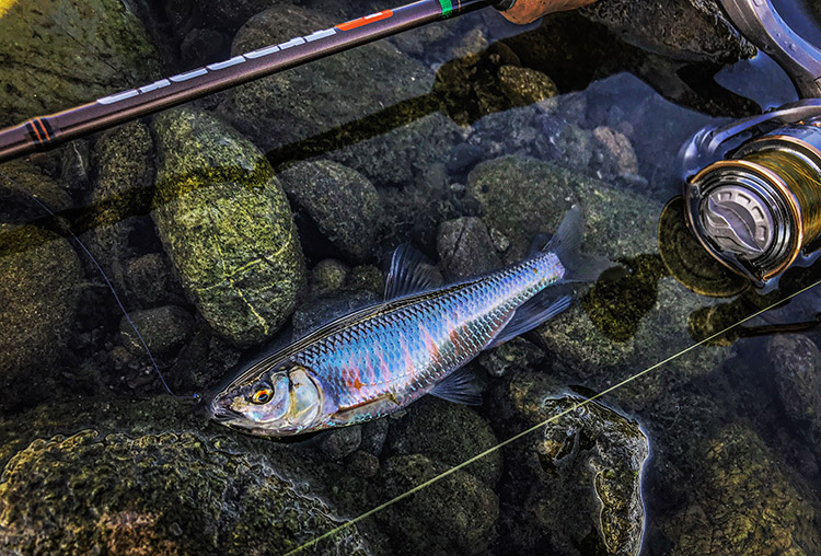 BIKE&FISH 毛鉤 オイカワ釣り