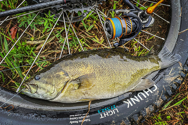 BIKE&FISH ゲイリーシュリンプ ワームで釣れたスモールマウスバス
